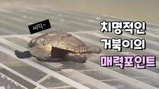 아무도 모르는 거북이&…
