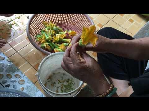 Thôn nữ miền Tây Lật bông bí vàng nấu canh   Nét Quê Miền Sông Nước