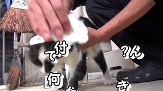 2018年 😼はなちゃん 33 (駐車場の子猫17額にシーリング材…?) thumbnail