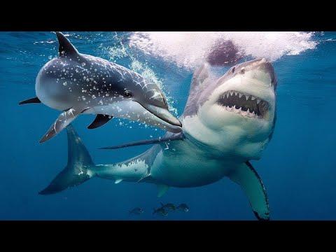 Köpekbalıkları Neden Yunuslardan Korkuyor?