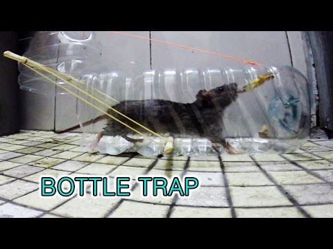 plastic bottle mouse trap (패트병 쥐덫)