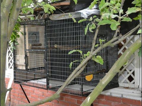Уличный, разборной, вольер для попугаев. Outdoor Aviary for Parrots