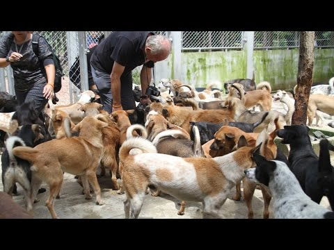 Rescued from the dog meat trade, they