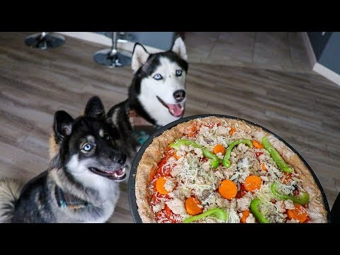 DIY Pizza For Dogs!