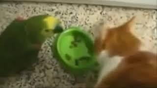 Смешные и странные попугаи 2018! Подборка приколов про попугаев!