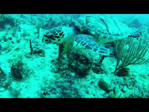 Antigua 5 - Open Water Dive