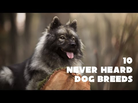 10  NEVER HEARD  DOG BREEDS | Animals Unlimited | Sameer Gudhate