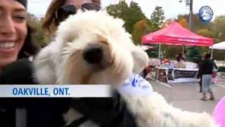 Repeat youtube video Top 10 videos of the week  October 21 - The Weather Network.