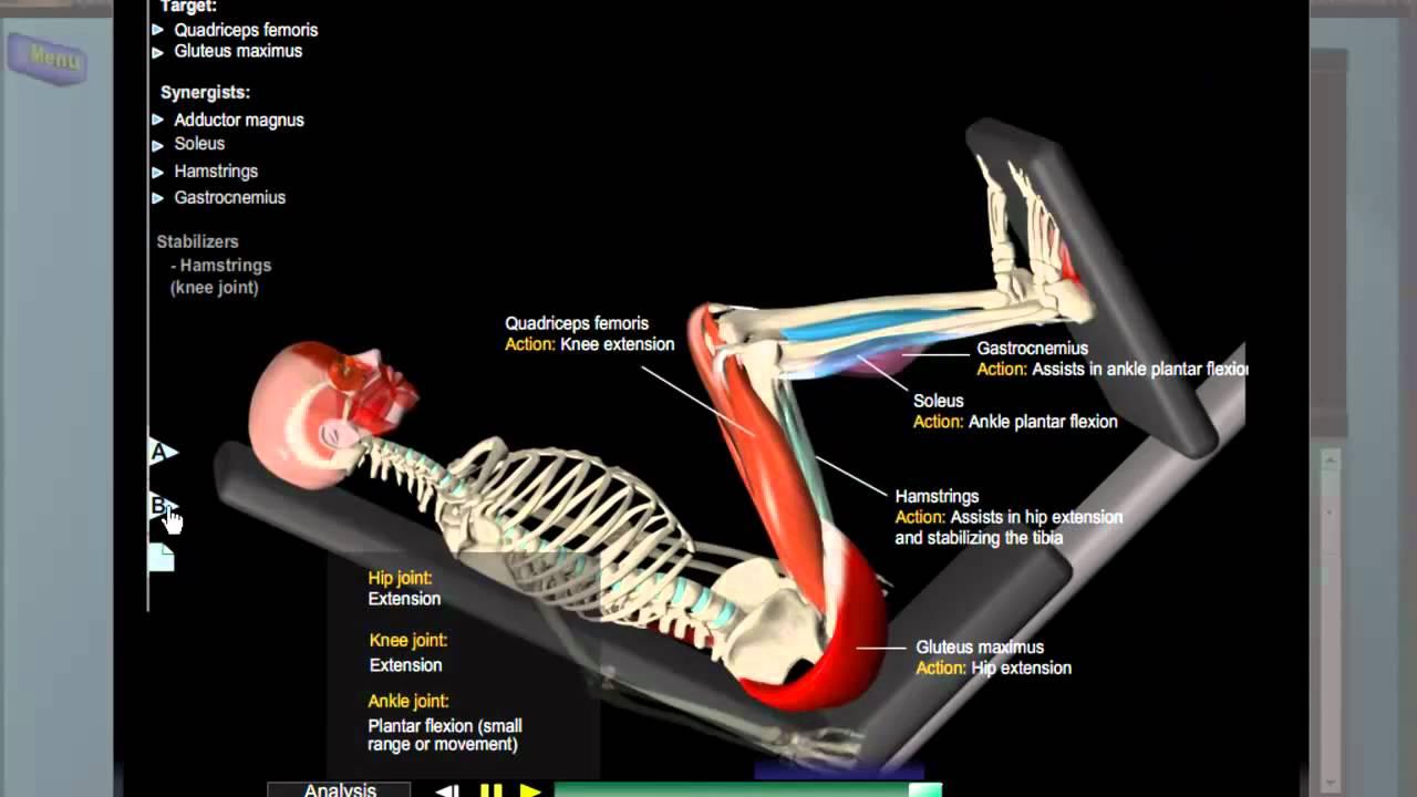 Leg Press Anatomy Youtube