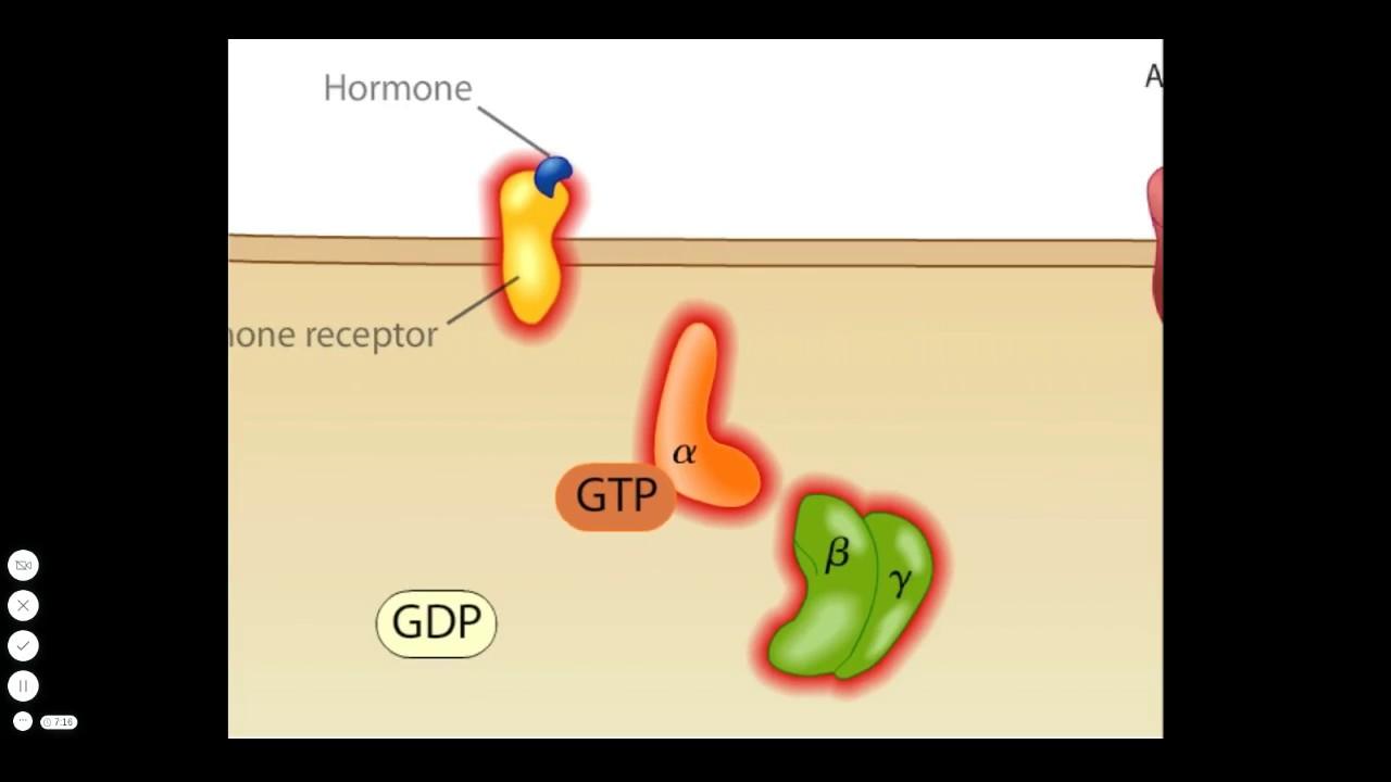Toxine vibrio cholerae. Vibrio Vibrionaceae – V. cholerae – V. mimicus – V