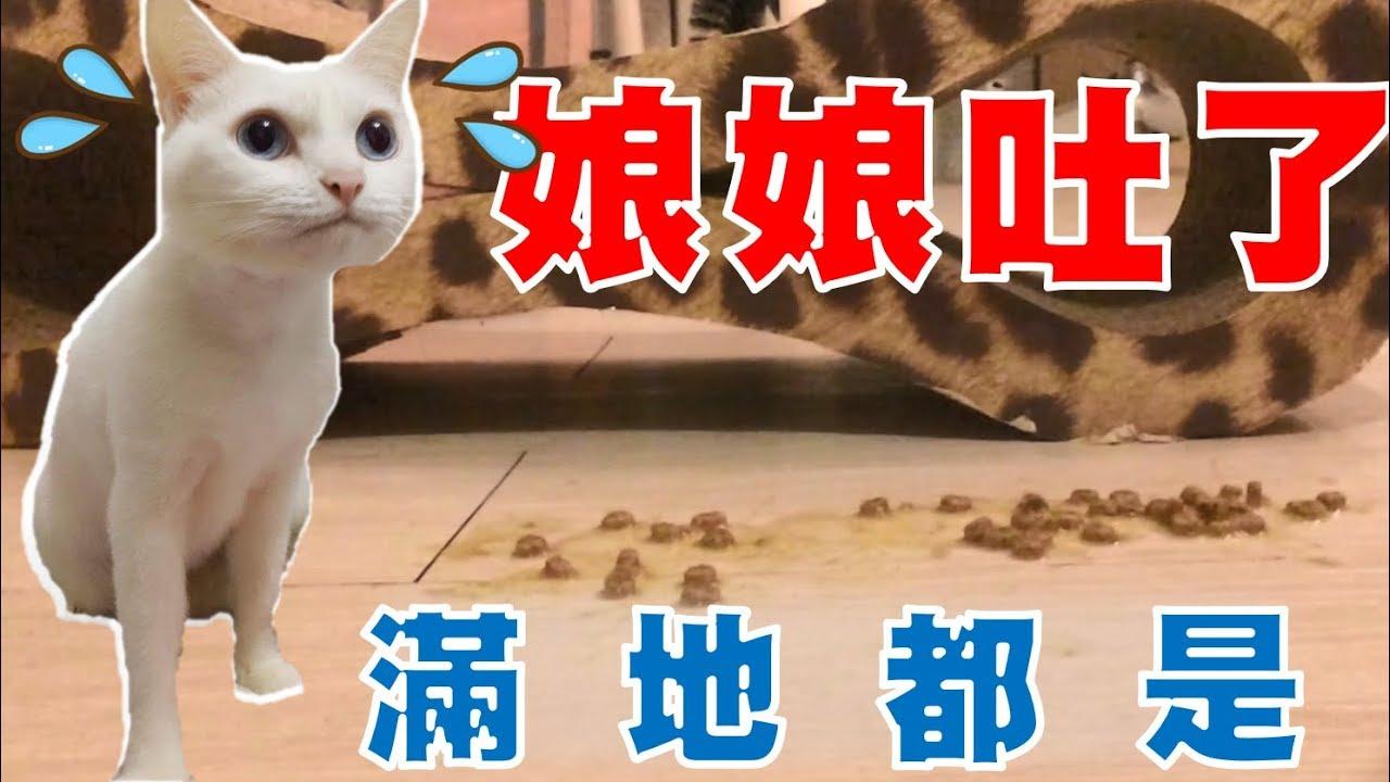 【豆漿 - SoybeanMilk】飼料吐滿地就算了 連罐頭也滿地都是.... - YouTube