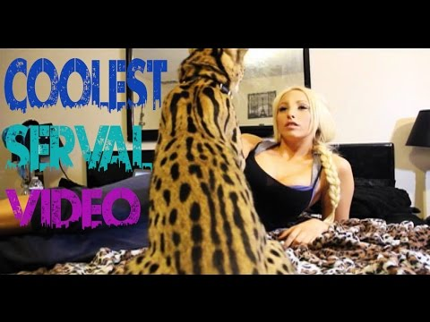 Coolest Serval Video!