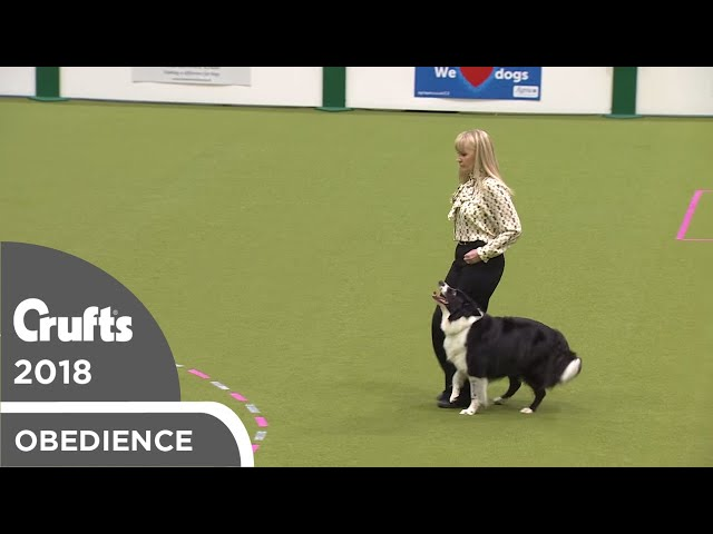 Obedience - Bitch Championship - Part 7 | Crufts 2018