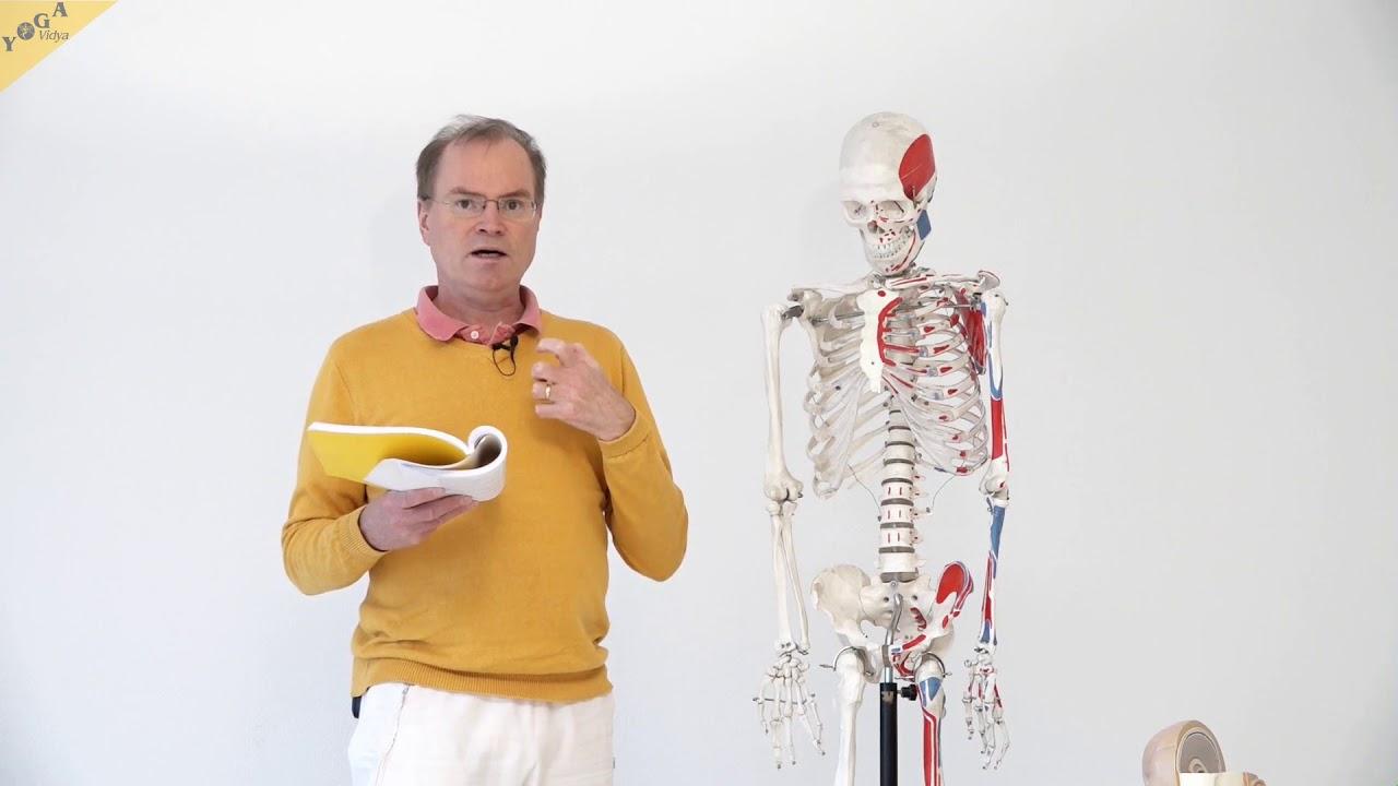 Anatomie und Physiologie: Anatomische Grundlagen – YVS335 – Wirkung ...