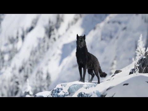 🐕 Зов предков 🐺 Поклик пращурів 🐻 Call Of The Wild 🌄 Трейлер 🗻 Фильм 2020 🔥