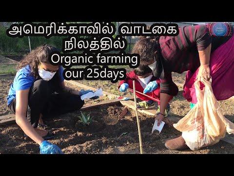 Rented Vegetable garden tour in America /Organic farming /Family Traveler(2020) / USA Tamil VLOG