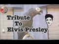 Einstein's Tribute to Elvis Presley