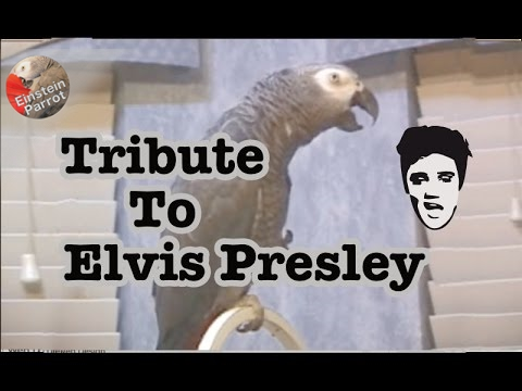 Einstein's Tribute to Elvis Presley