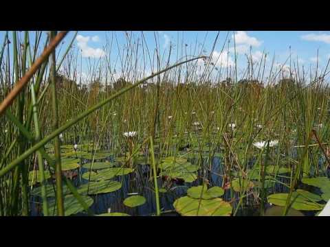 P5098201   Mokorotochtje door Okavango delta