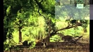 Мудрец Йога Васиштха - Обучение Рамы и полное понимание истинного абсолюта. 067