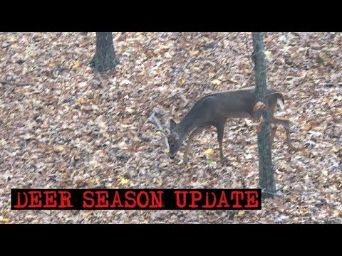 Georgia Deer Season Update And Hunting Trip In The LBL In Kentucky.