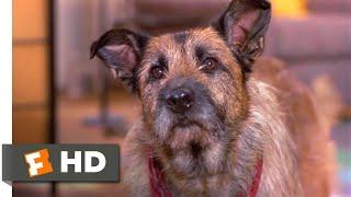 Look Who's Talking Now (1993) - Rocks & Daphne Scene (4/10)   Movieclips
