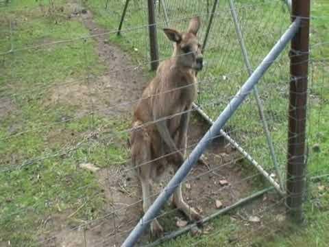 Launceston Tasmania Zoo