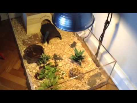 Sonic The Golden Greek Tortoise Enclosure Update