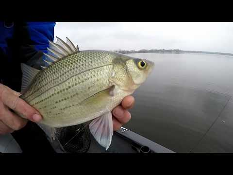 Lake Of The Woods Indiana Fishing For White Bass