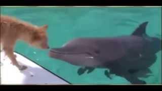 un dauphin sauve un chien des mâchoires d'un requin