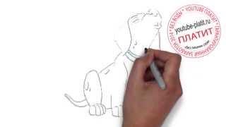 101 далматинец онлайн мультфильм  Как поэтапно карандашом нарисовать далматинца из мультфильма 101 д