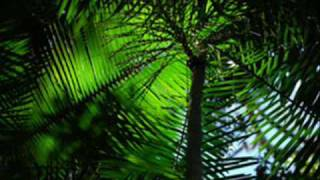 Giorgio Giordano - Amazzonia (David Tort Remix)