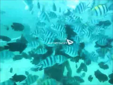 Diving Nusa Dua, Bali