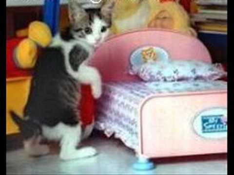 صور قطط مضحكه مع النغمة