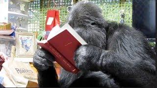 Koko Loves Betty White's Book