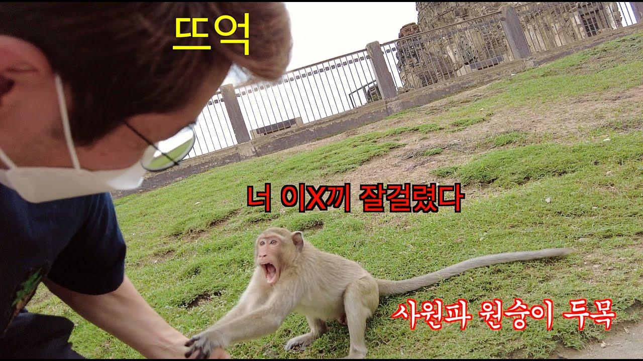 원숭이 두목한테 깝치다가 얻어 맞은 사연 - 나혼자 태국일주 - 방콕근교 롭부리 -