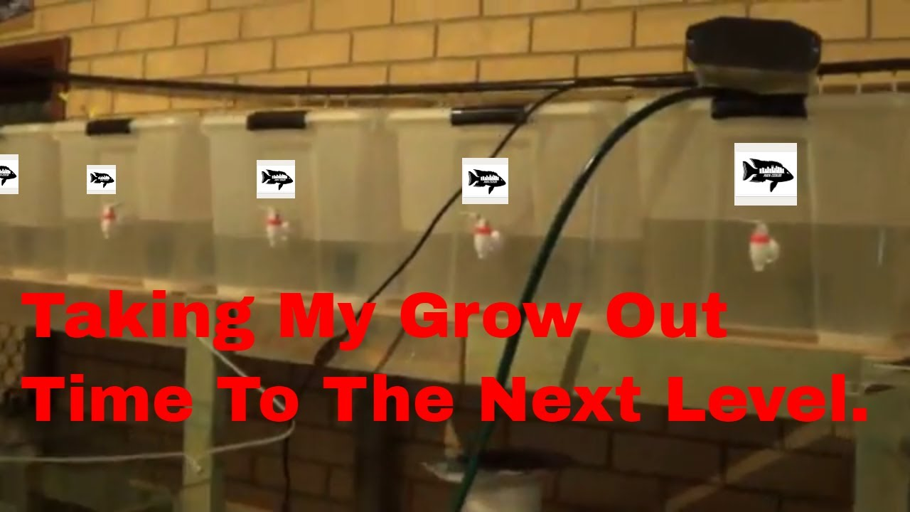 Tub rack going up in fish room 2. - YouTube
