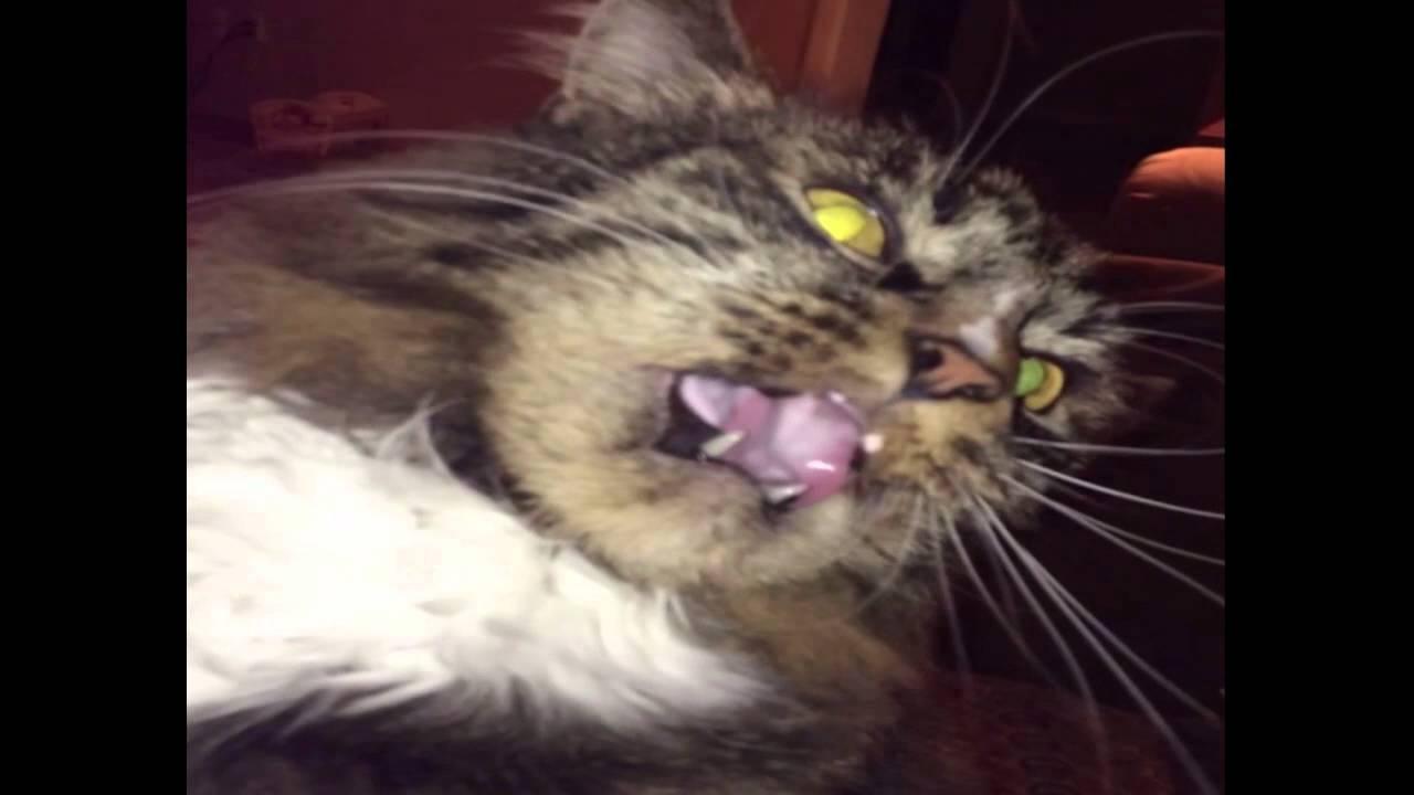 Cats Get Brainfreeze