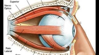 Como Melhorar A Visão - Exercícios Para a Saúde dos Olhos