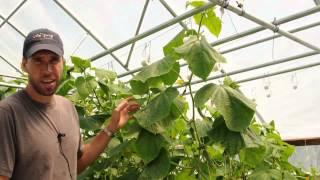 Lower & Lean ::  Intro To Greenhouse Rollerhook Trellising