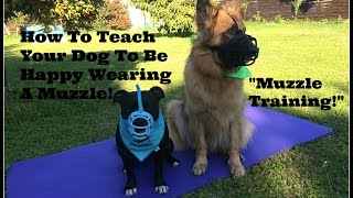 How To Teach Your Dog To Love Wearing A Muzzle.