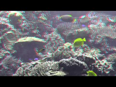 Amazing Underwater World -  Relaxing 3D Video in HD - Requires Red and Blue Glasses