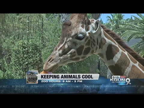 Reid Park Zoo officials have a plan to keep every animal cool