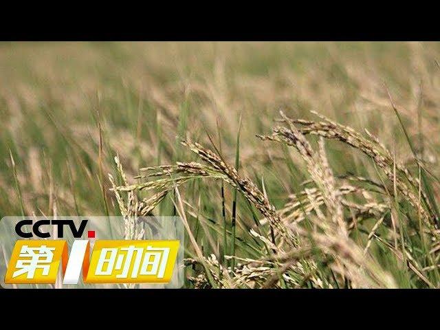 《第一时间》云南澜沧:持续高温致使农作物不同程度受灾 20190522 1/2   CCTV财经