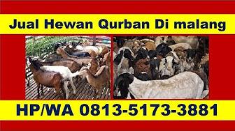 Contoh Brosur Jual Hewan Qurban - Brosur dan Spanduk