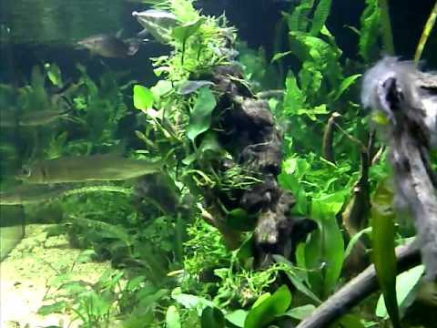 Predator Aquascape Tank Youtube