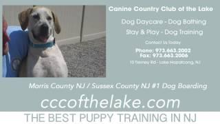 Puppy Training Mendham Nj