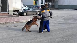 Обучение ЗКС (защитно-караульная служба)