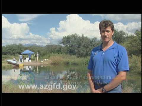 Arizona wildlife views 2008 episode 13 by the arizona game for Az game and fish fishing report