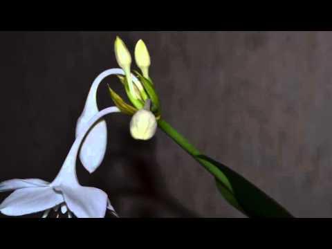 Flower in timelapse - Nikon D3100